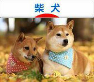 shibaken200_40a.jpg